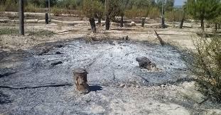 Destrozo Parque RODA