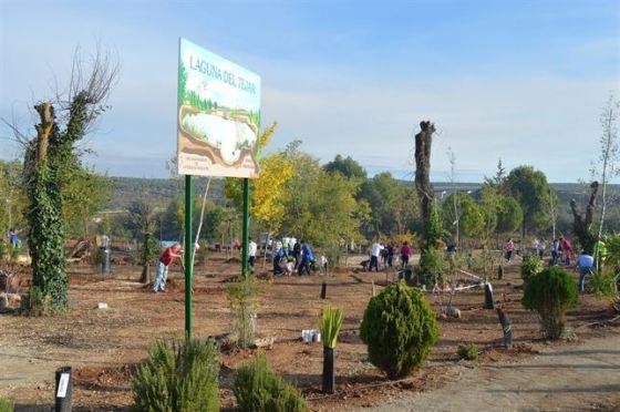 Replantacion 200 árboles